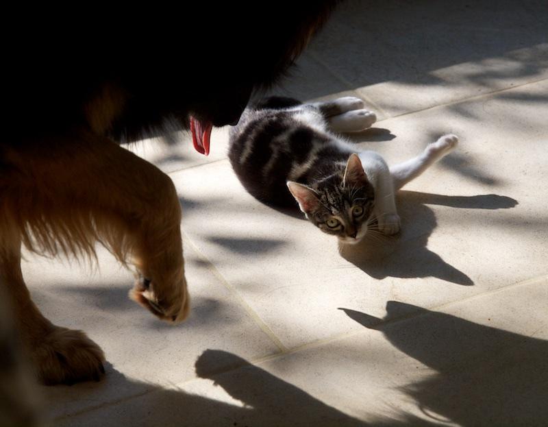 Cat & Dog Cetd_110