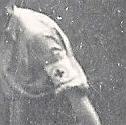 Identification brassard Numyri33