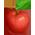 Habitat des Kangourous / Habitat Kangourou Pirate => Noix de Macadamia Apples10