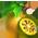 Arbre à fruit de beli Baelfr13