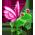 Habitat Grenouille => Imprimé Grenouille Fairyf10