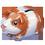 Habitat Cochon d'Inde => Imprimé Cochon d'Inde Guinea14