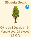 Séquoia Géant => Cône de Séquoia Sans_331