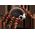 Habitat Araignée Spooky11