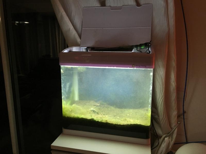Projet nano-récif (40 litres) Img_0410