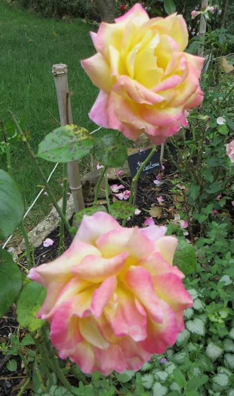 rosa pullman orient express Pullma10