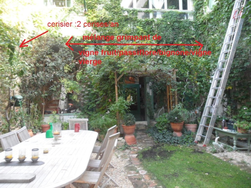 Balcons, Terrasses et Jardins...Plantes et Aménagements... Mur_c_10