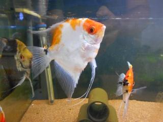 Mes aquariums Dscn0013