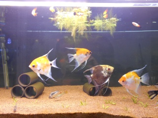 Mes aquariums Dscn0014