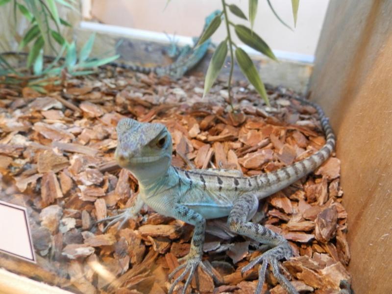 Reptile day 2015 Pb080033