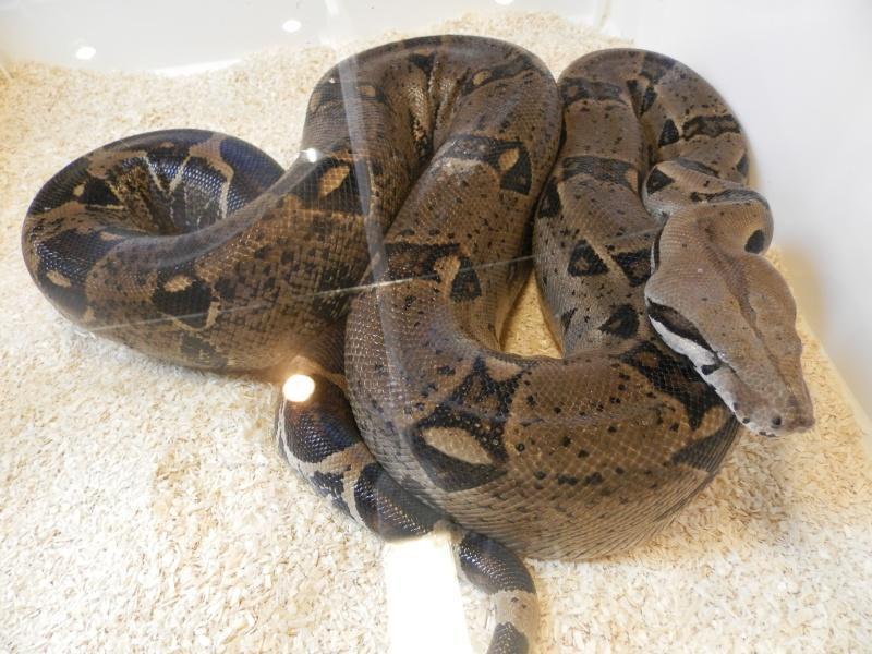 Reptile day 2015 Pb080051