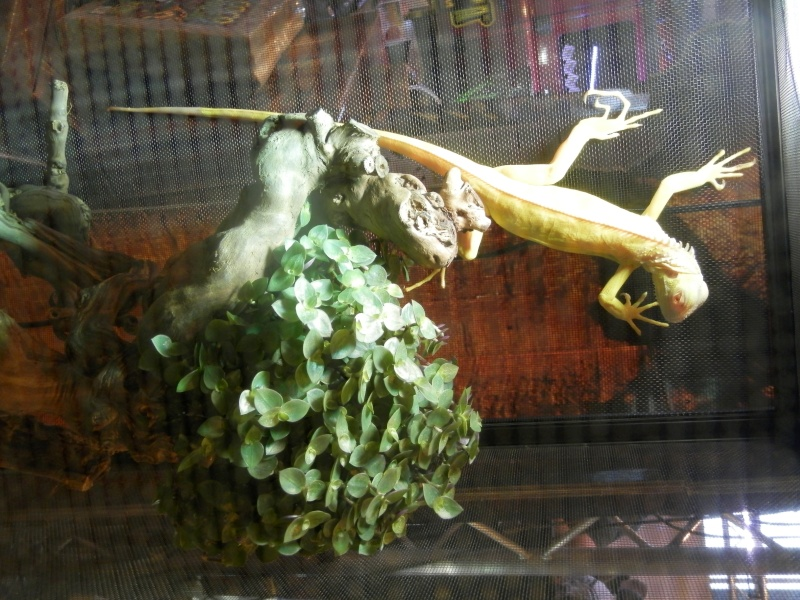 Reptile day 2015 Pb080057