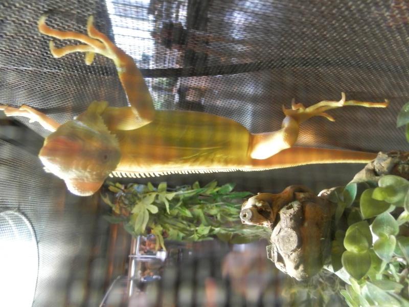 Reptile day 2015 Pb080058