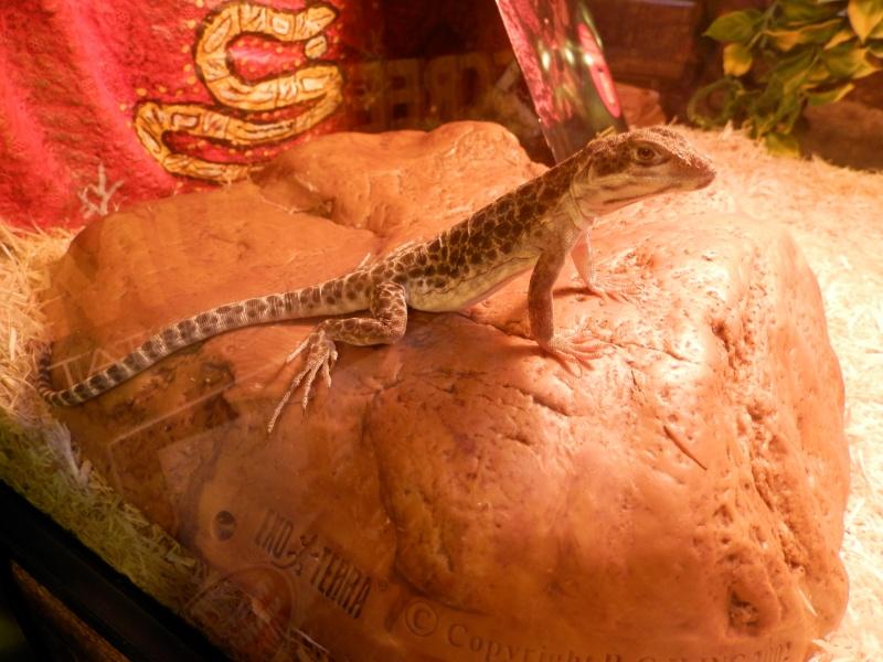 Reptile day 2015 Pb080079