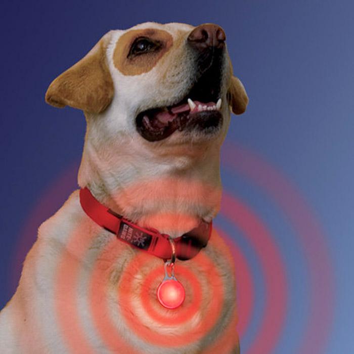 Lampe à Led clignotante à attacher au collier du chien Cligno10