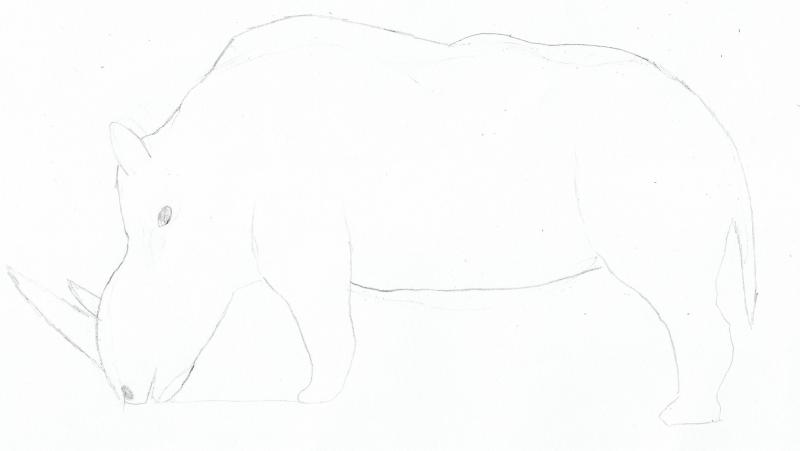 Riesenhornschwein Riesen10