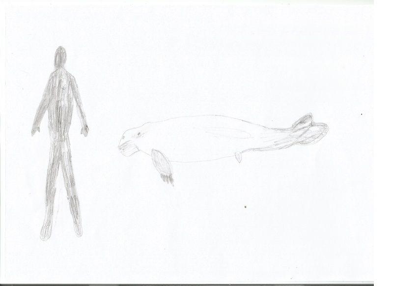 Sirenodon Sireno10