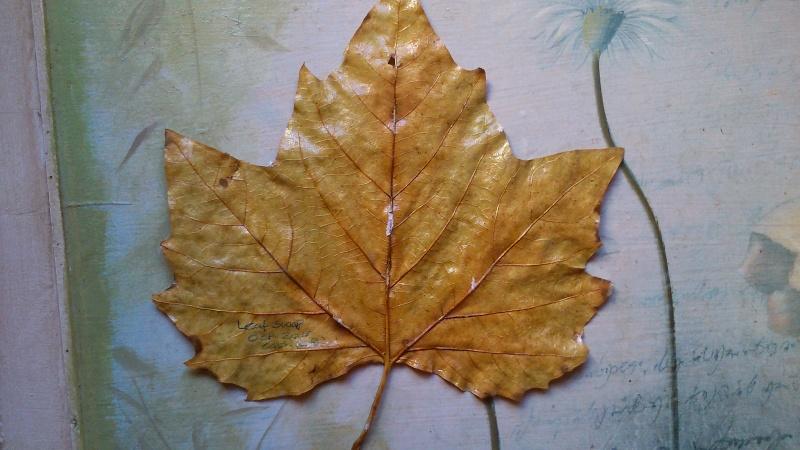 Leaf Swap 2015-111