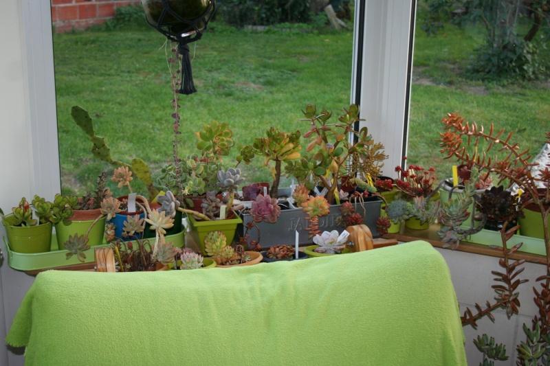 mes succulentes en hivernage  Img_2237