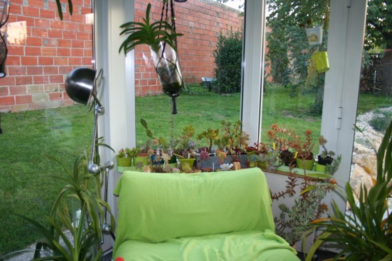 mes succulentes en hivernage  Img_2238