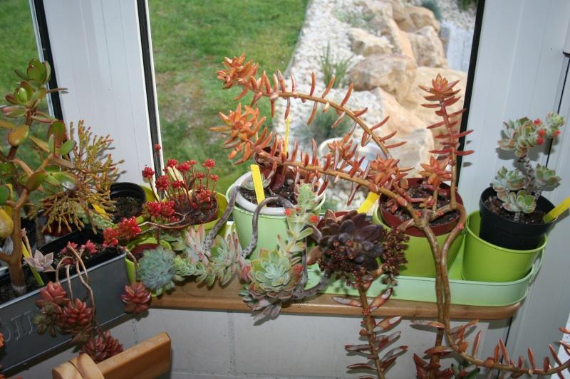 mes succulentes en hivernage  Img_2312