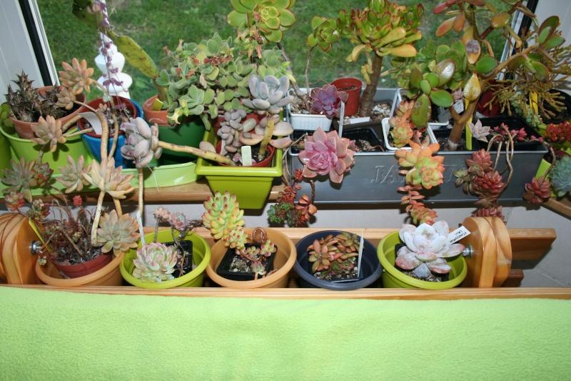 mes succulentes en hivernage  Img_2313