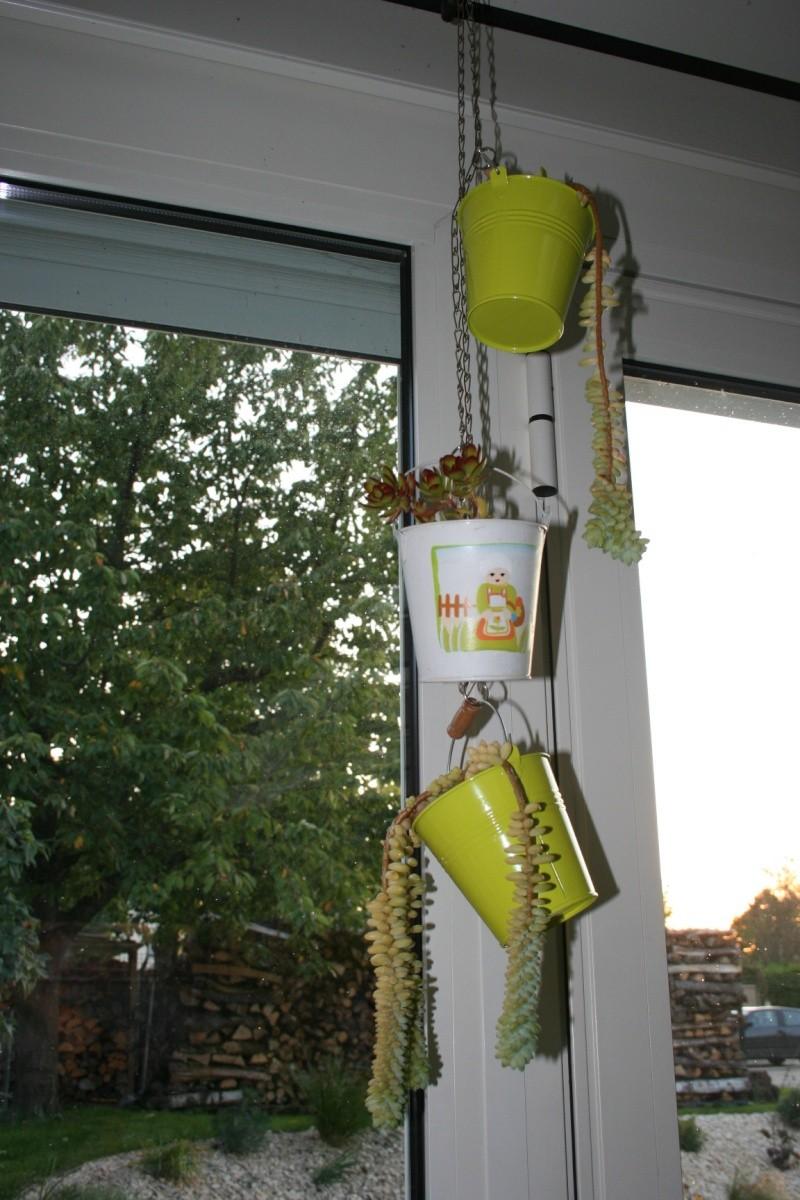 mes succulentes en hivernage  Img_2314