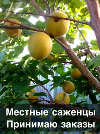 """Центр раздач """"У Фифы"""" на Салмышской, 56   - Страница 2 Img_8112"""