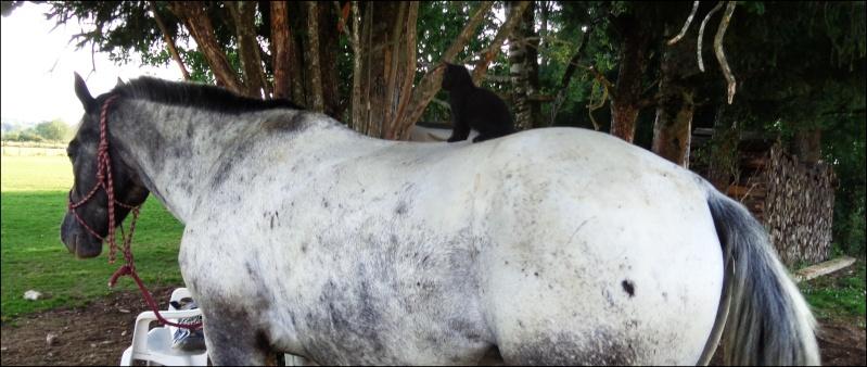 CONCOURS : Le cheval et les autres animaux  Dsc00310