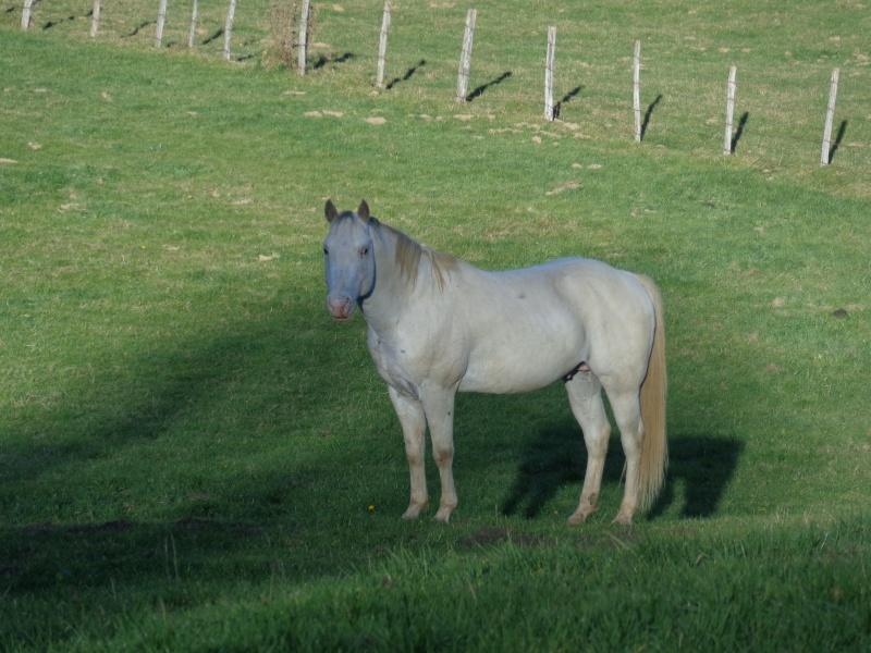 Cheval appaloosa - Portail Dsc08321