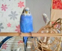 Mes colocataires à plumes ! Dscn0912