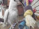 Mes colocataires à plumes ! - Page 2 P4230110