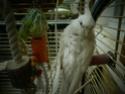 Mes colocataires à plumes ! - Page 2 P4230111