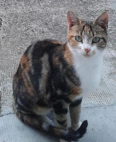 Chats abandonnés cherchent nouvelle maison, photos Rousse12