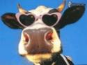 Graines de courge Vache-10
