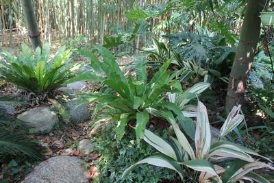 Peut-on sortir des orchidées semi-rustiques dès avril ? Asplen10