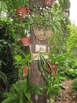 Peut-on sortir des orchidées semi-rustiques dès avril ? Epiphy10
