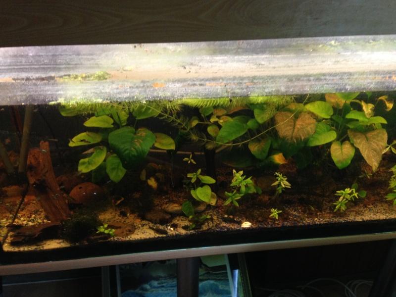 Une ménagerie aquatique Img_3311