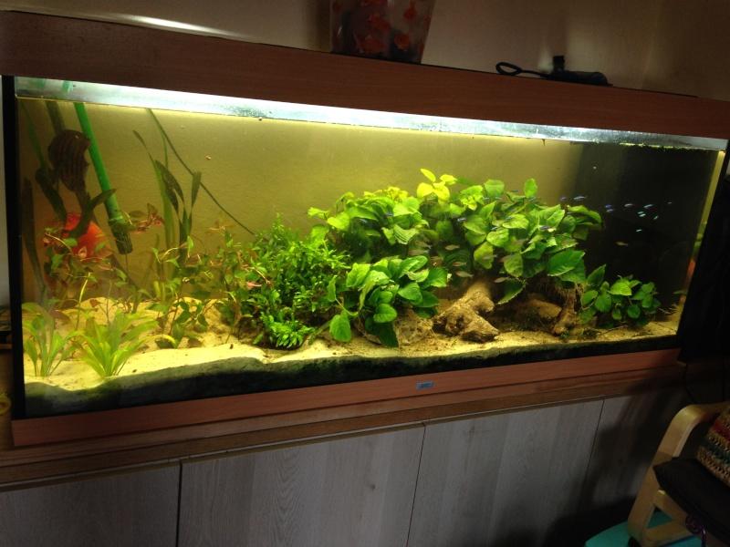 Une ménagerie aquatique Img_3721