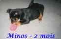 JUNIOR, mâle croisé Beauceron né en 2013 Minos10