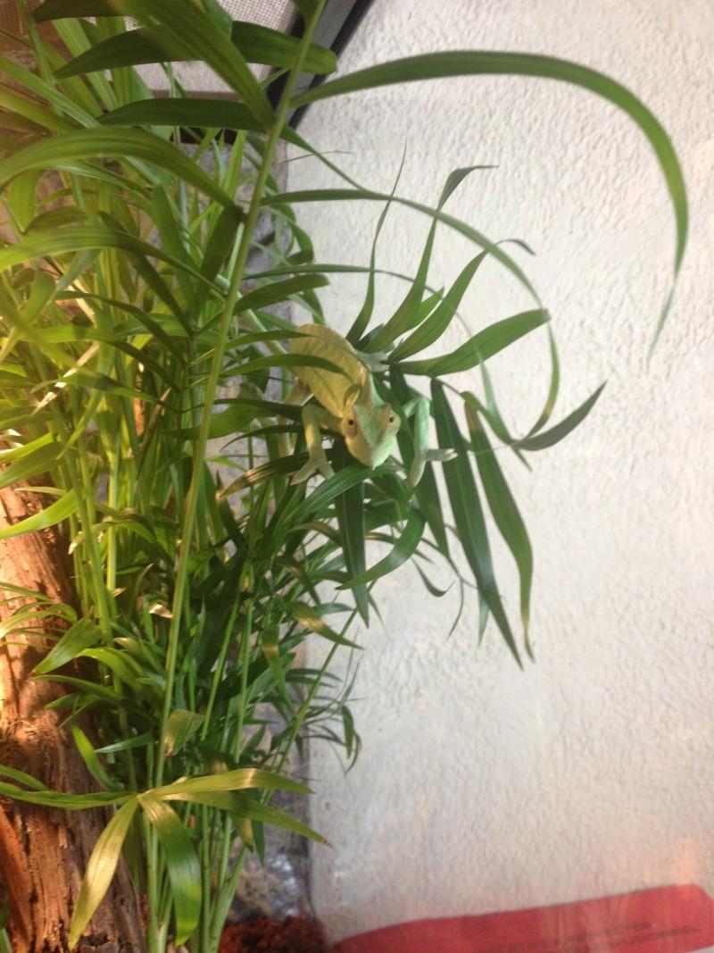 Ma famille de reptiles ! Img_3324