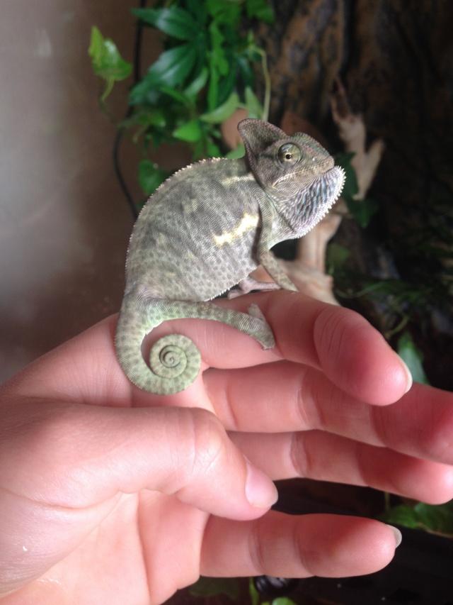 Ma famille de reptiles ! Img_3325