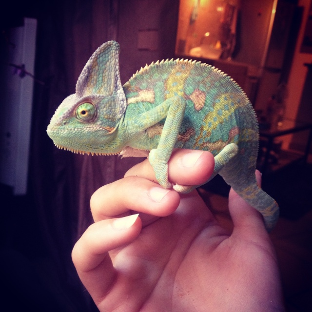 Ma famille de reptiles ! Img_4110
