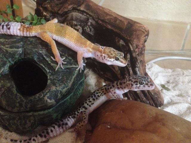 Ma famille de reptiles ! Img_4212