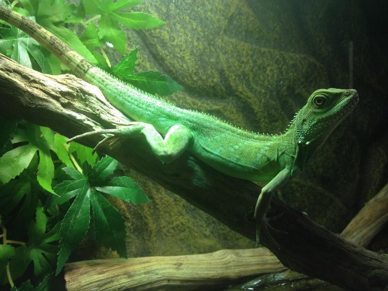 Ma famille de reptiles ! Img_4310