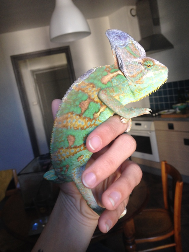 Ma famille de reptiles ! Img_4510