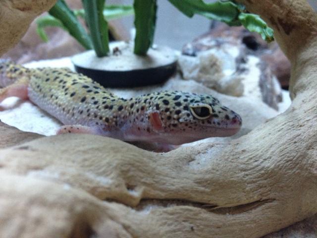 Ma famille de reptiles ! Img_4612