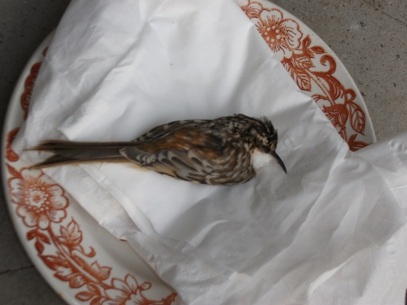 Magnifique mais étrange, est-ce un colibri?  Dscf1611