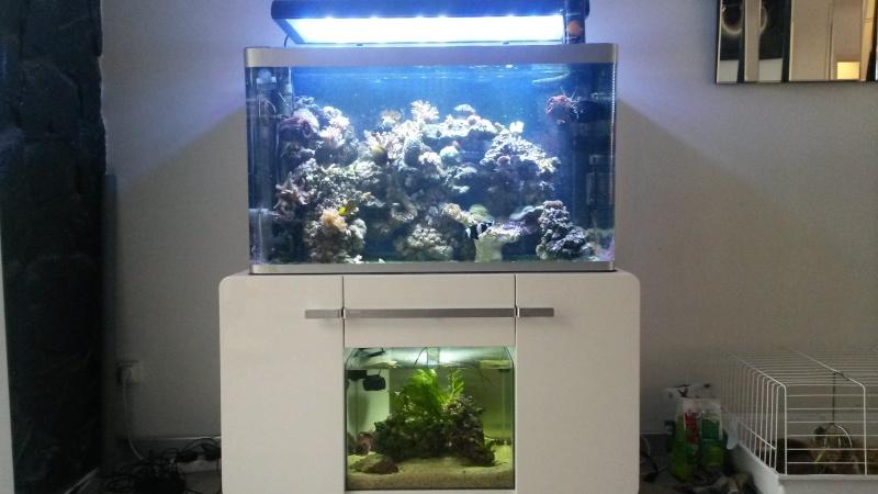 Aquarium de Samix  - Page 11 20151114