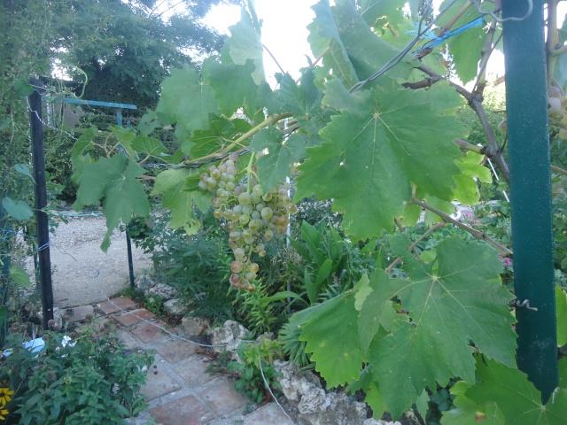 Avez-vous une vigne ? Dsc06411